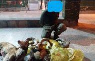 شکارچی قوچ در منطقه قرق منصورآباد دستگیر شد