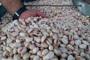 صدور «گواهی قرنطینه صادرات» برای ۱۷ هزار تن پسته در رفسنجان